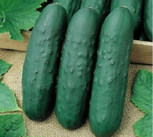 Picture of Eureka Hybrid Cucumber