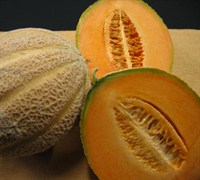 Ambrosia Cantaloupe Picture