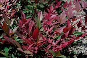 Top 10 Most Colorful Winter Landscape Plants