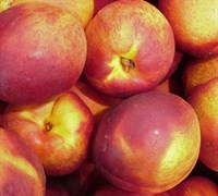 Sungold Nectarine Picture