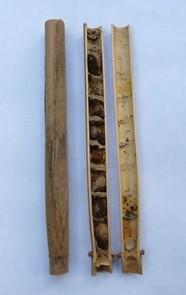 Open mason bee reed