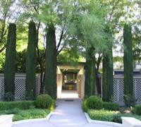 Italian Cypress Picture