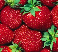 All Star Strawberry Picture