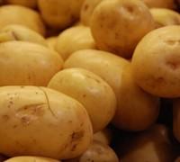 Yukon Gold Potato Picture