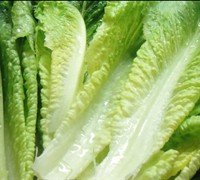Romaine Lettuce Picture