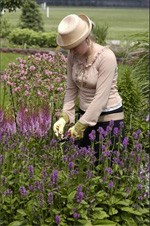 Deadheading Perennial Plants