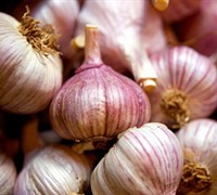 Sicilian Garlic Picture