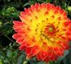 rubys garden heaven