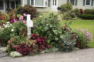 How To Build And Plant A Raised Annual Flower Bed Zone A Garden Bed Designs Ideas Html on