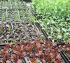 Veggie seedlings in the nursery