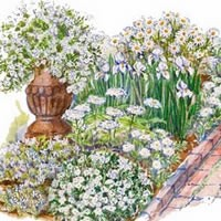 Theme Garden White