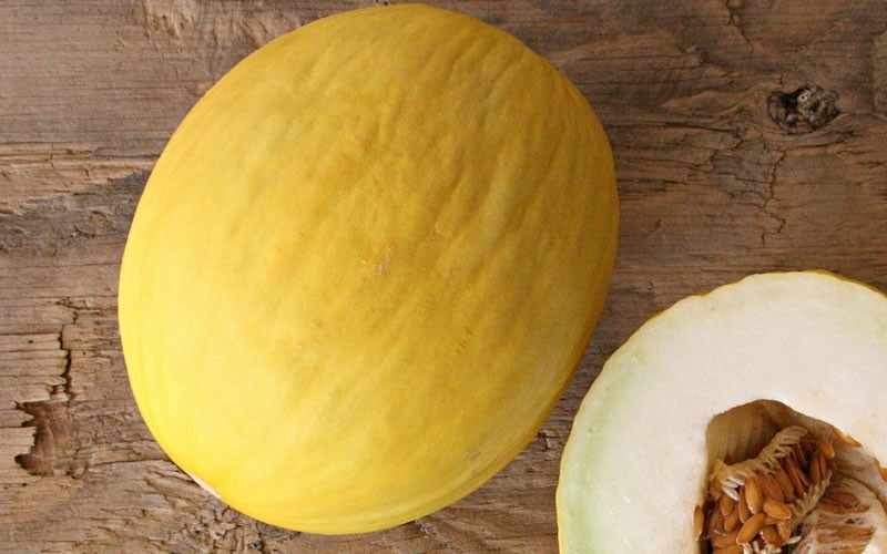 Gold Canary Cantaloupe Picture