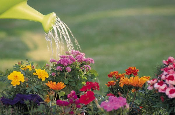 Watering your flowers