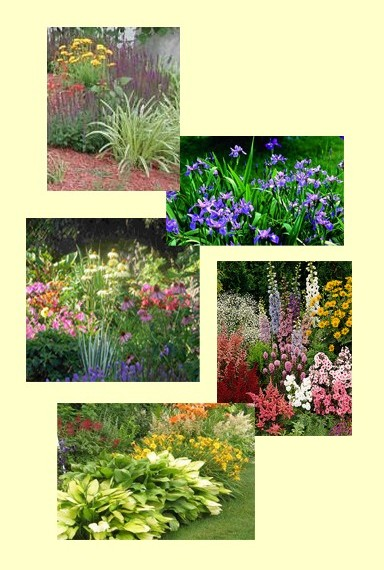 Dividing Your Perennials