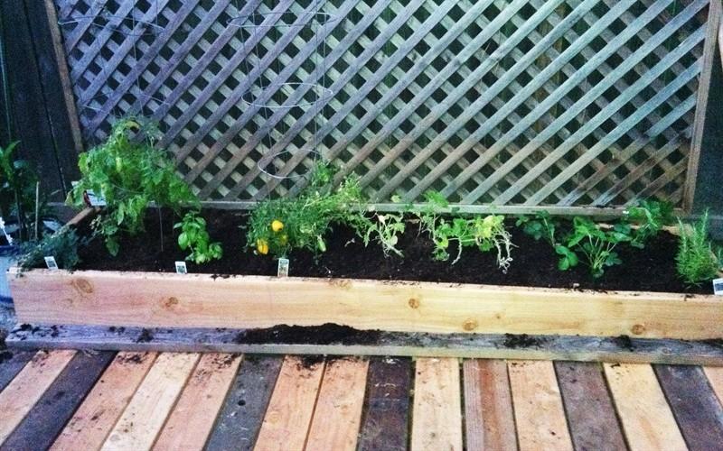 Tomatoes, squash, herbs. Delish!