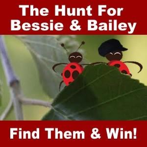 Find Bessie