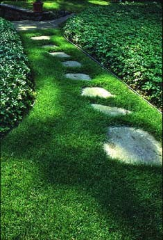 Groundcover Aside Path