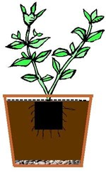 Planting In Containers Diagram