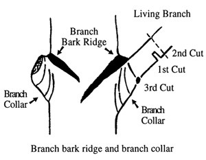 Pruning Shade Tree Diagram