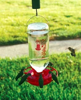 Hummingbird Feeder Best 1
