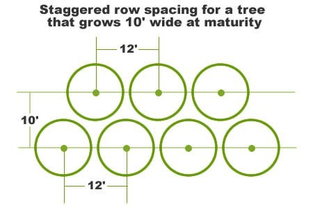 Row Tree Spacing for Screen or Buffer