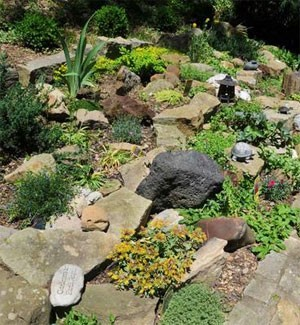 Rock Garden With Plants