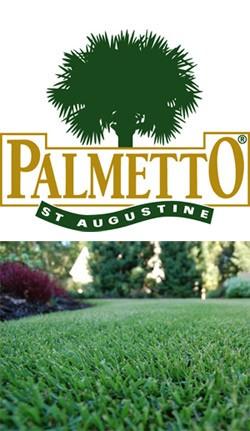 Palmetto St Augustine Lawn