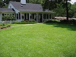 Tifblair Centipede Grass Lawn