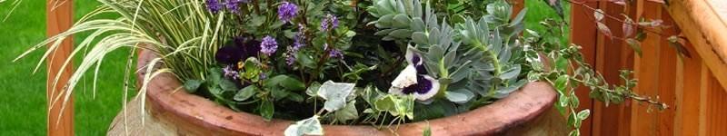 Container Flower Garden Design Tips & Ideas
