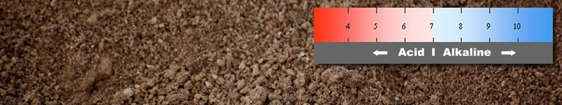 What Is Soil pH And How To Adjust It
