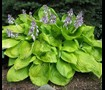 Hosta Garden, side of house