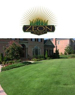 Zeon Zoysia Grass Lawn