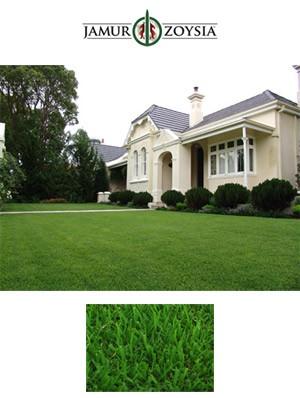 Jamur Zoysia Grass