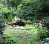 Pond Garden Picture