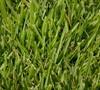 Meyers Zoysia Grass